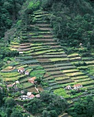 Terraced agricultural land on Madeira, Portugal