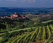 The Castiglione Falletto wine village in Piemonte, Italy