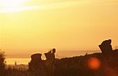 Grape picking at sunset, Vosne Romanee, burgundy