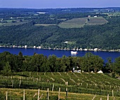 Bully Hill vineyards west of Lake Keuka, New York