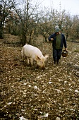 Man with truffle pig in forest (Le Quercy, Provence 1)