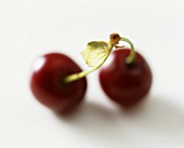 A pair of cherries