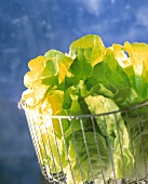 Lettuce leaves with drops of water in lattice bowl