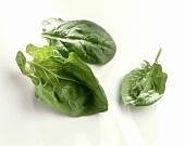 Three fresh spinach leaves