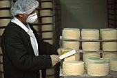 Cheese maker brushing blue cheese in maturing room