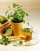 Still life with lemon balm tea, lemon balm and limes
