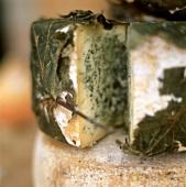 Blue-veined cheese in vine leaves