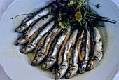 Sarde in marinata (marinated sardines, Italy)