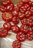 Red beefsteak tomatoes (Ochsenherz variety)