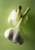 Two garlic bulbs against green background