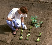 Woman planting out young plants