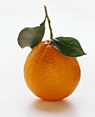 Spanish orange with stalk and leaves