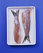 Two matie herrings on shallow bowl on blue background
