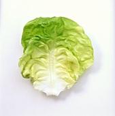 A lettuce leaf