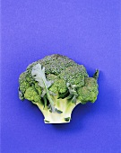 A head of broccoli on blue background