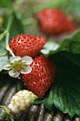Wild strawberries, flowers and unripe fruit on the plant