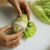 Making lettuce rolls