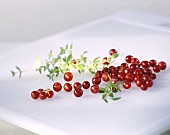 Cranberries with thyme stalk