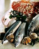 Fish Still Life