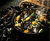 Steaming mussels in pan
