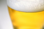 A glass of lager (close-up)