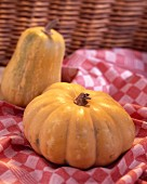 Japanese pumpkin and butternut squash