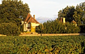 Chateau Rausan-Segla vineyard, Margaux, Bordeaux