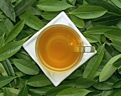 A cup of mate tea on fresh leaves (Ilex paraguayensis)