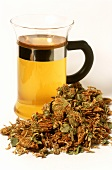 White clover tea and flowers (Trifolium repens)