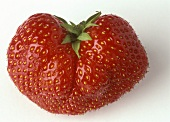 A strawberry (variety: Senga gigantea)