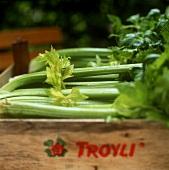 Celery in wooden crate