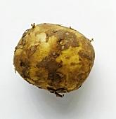 A potato (variety; Spunta)