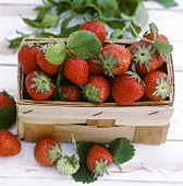 Strawberries with leaves in chip basket