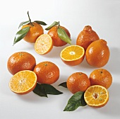 Citrus fruits (clemenvilla, tangelo, clementine, minneola)