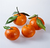 Four clementines with leaves