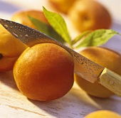Halving apricots