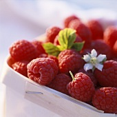Raspberries with flowers in punnet