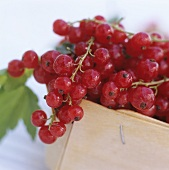 Red currants in punnet