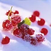 Redcurrants on crystal sugar