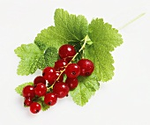 Truss of redcurrants with leaves