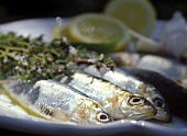 Sarde marinate (Sardines with herbs), Sicily, Italy