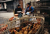 Chickens in a cage at a market in Sichuan