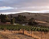 Weinberge im Besitz vom Bethany Weingut, Barossa Valley