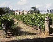 Wynns Winery at Connawarra, S. Australia