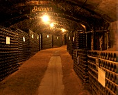 Wine cellar at Great Western, Victoria, Australia