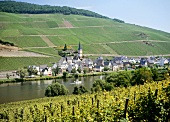 Wine village Merl an der Mosel, Cochem-Zell, Rheinland Pfalz