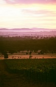 Sunrise above Seppelt vineyards, Victoria