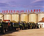 Airen-Trauben auf Anhänger warten auf Verarbeitung,Valdepenas