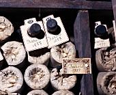 Barolo-Weinflaschen (Jahrgänge 1957 und 1951),Pio Cesare,Alba