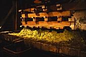 Alte Weinpresse im Weingut von Joseph Drouhin, Montrachet